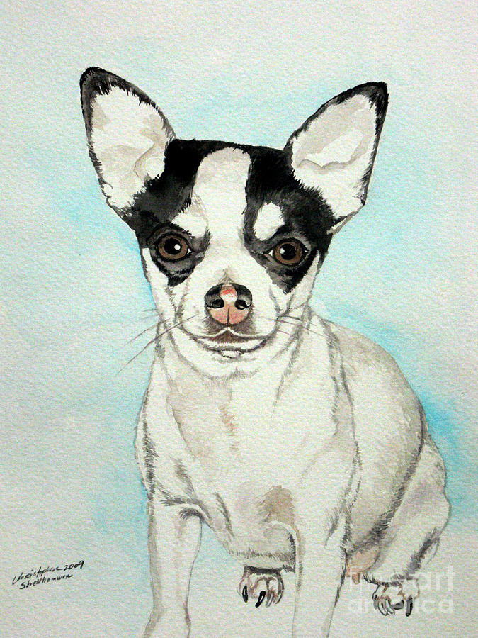 Chihuahua Dog Black And White