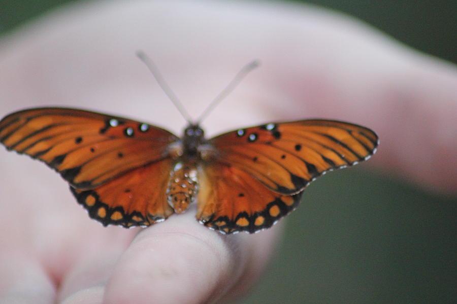 Rebirth Photograph - Child And Butterfly - We Shall Renew Again by Carolina Liechtenstein