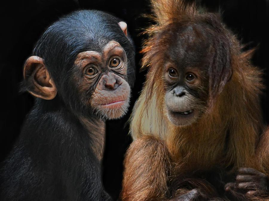 Children Of The Evolution Photograph