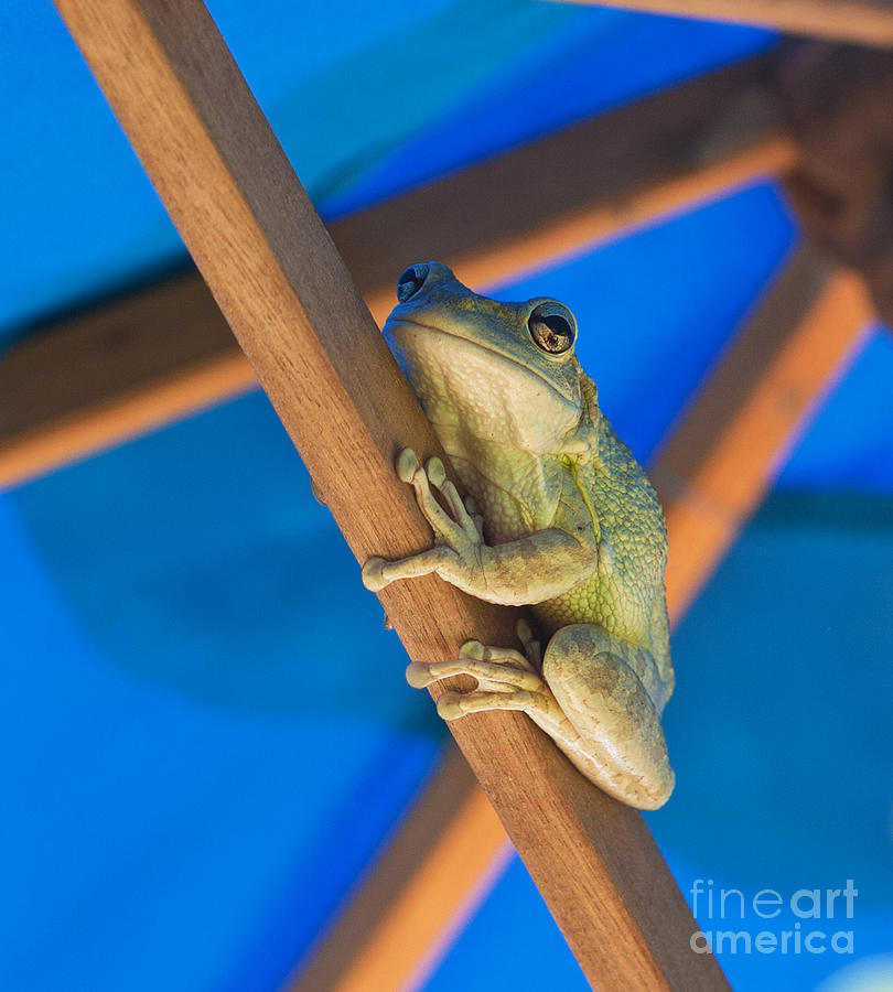 Frog Photograph - Chillin By The Pool by Michelle Wiarda