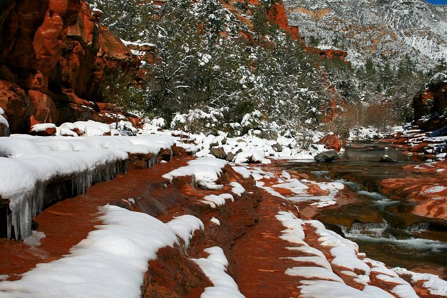Arizona Photograph - Chillin by Miles Stites
