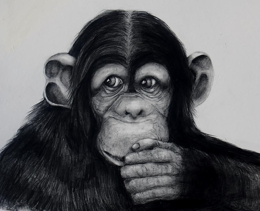 Chimp Drawing - Chimp by Jean Cormier