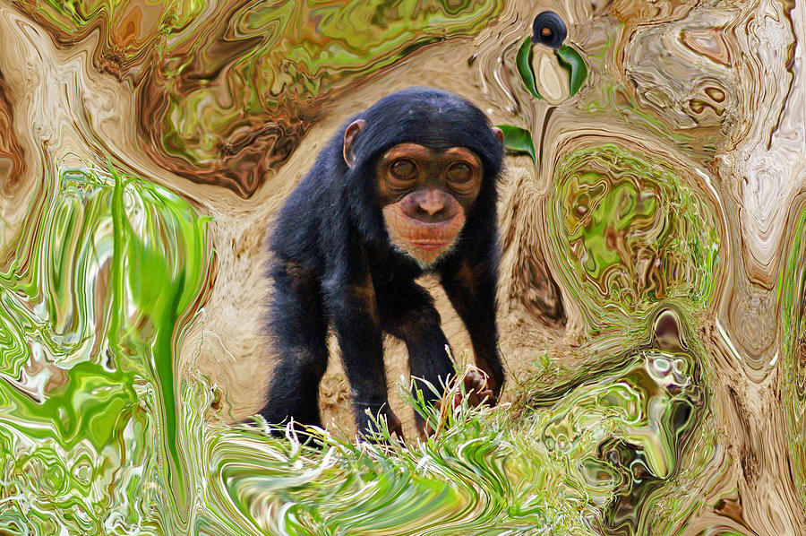 Chimpanzee Photograph - Chimpanzee by Daniele Smith