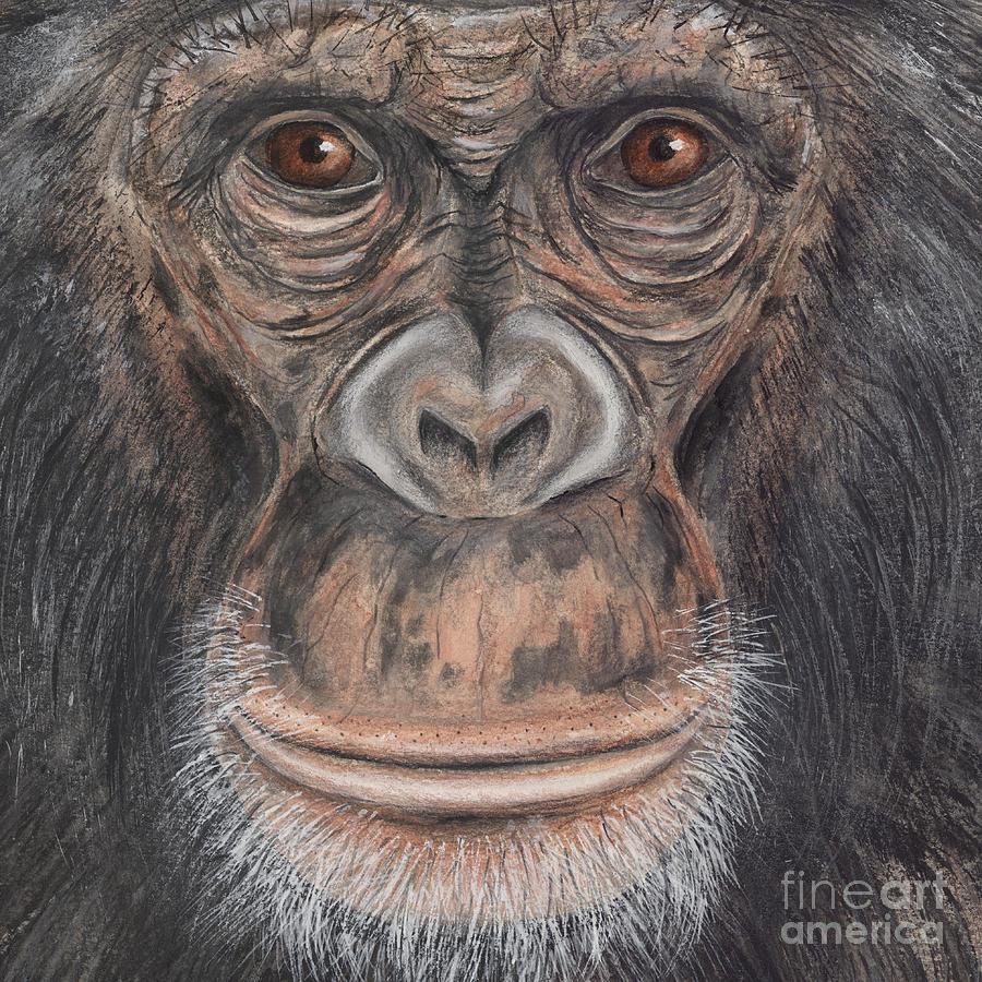Chimpanzee Face - Pan Troglodytes - Fine Art Print - Stock Illustration - Stock Image Painting