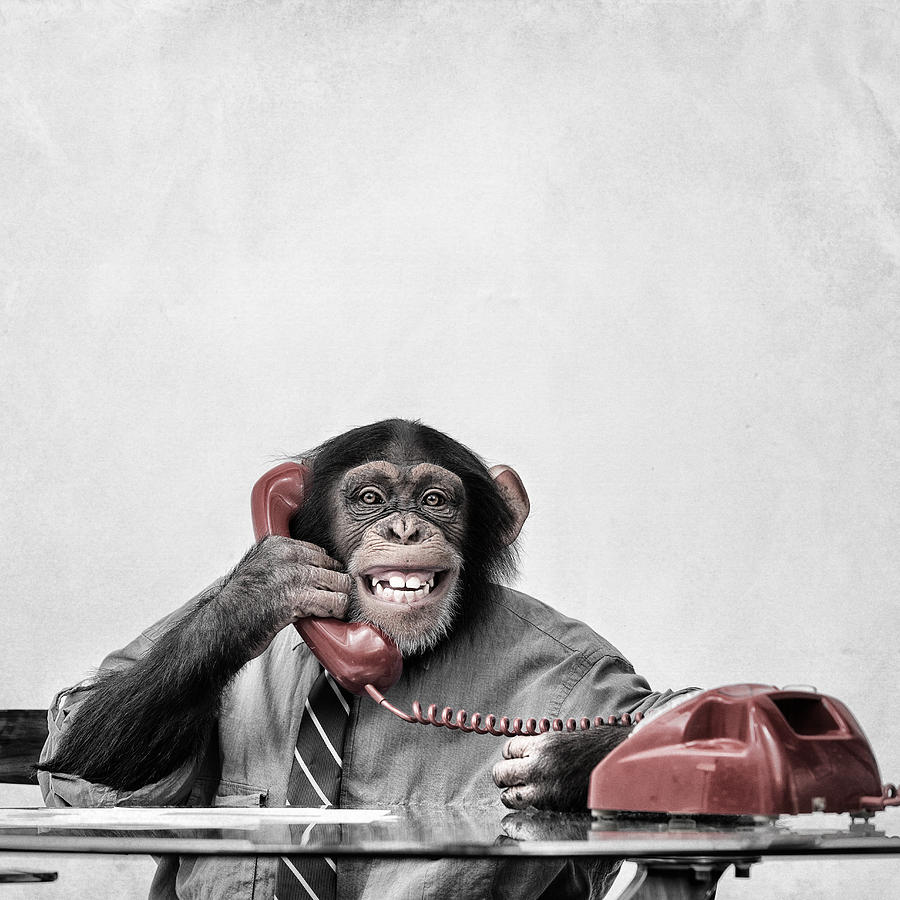 Chimpanzee on the phone Photograph by Lisegagne