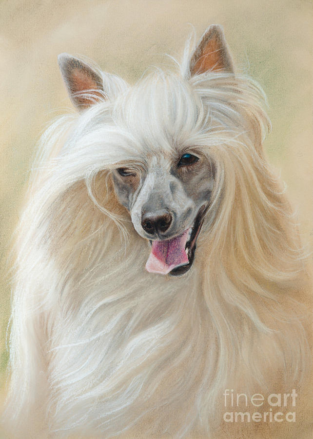 Chinese Crested Drawing - Chinese Crested Dog by Tobiasz Stefaniak