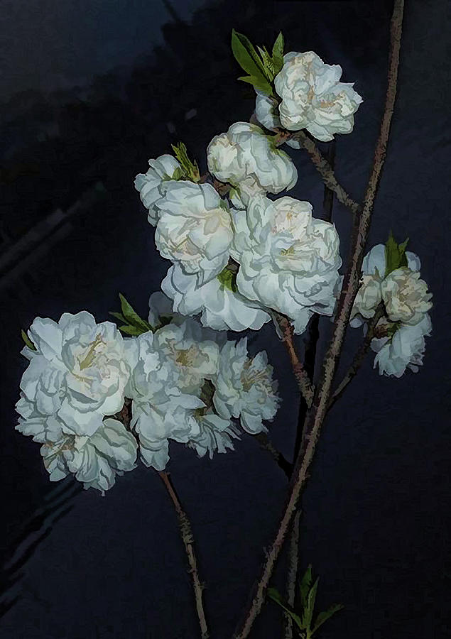 White Flowers Photograph - Chinese Flowers by Cathy Anderson