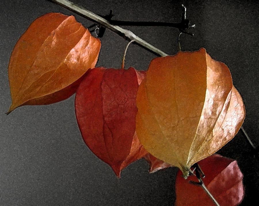 Nature Photograph - Chinese Lantern Plant At  Midnight by Patricia E Sundik