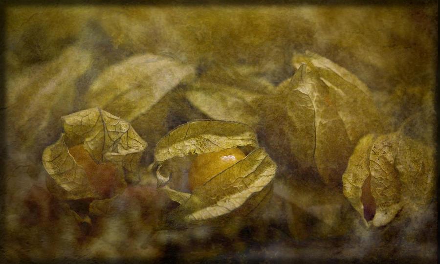 Physalis Photograph - Chinese Lanterns by Liz  Alderdice