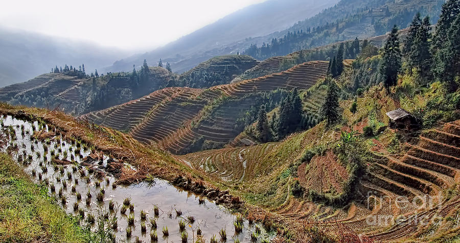 Travel Photograph - Chinese Rice Terraces by Alexandra Jordankova