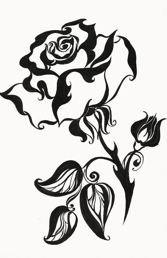 Chinese Rose Drawing By Jenny Rainbow