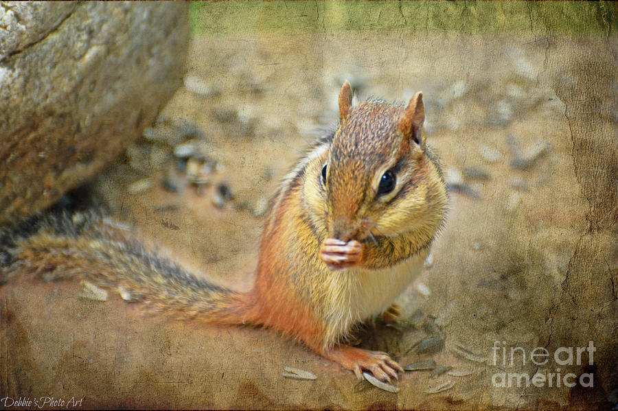 Animal Photograph - Chipmonk by Debbie Portwood