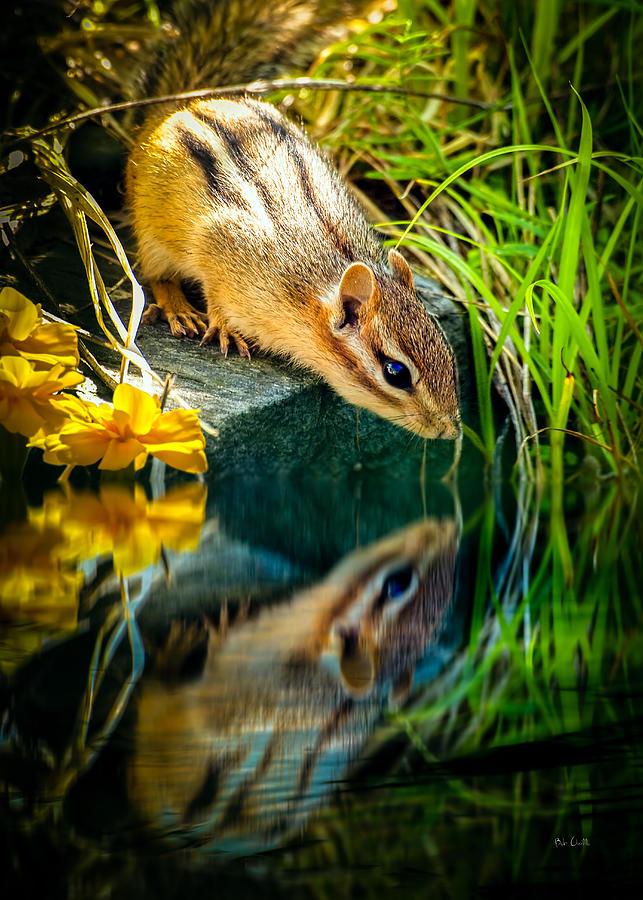 Chipmunk Photograph - Chipmunk Reflection by Bob Orsillo