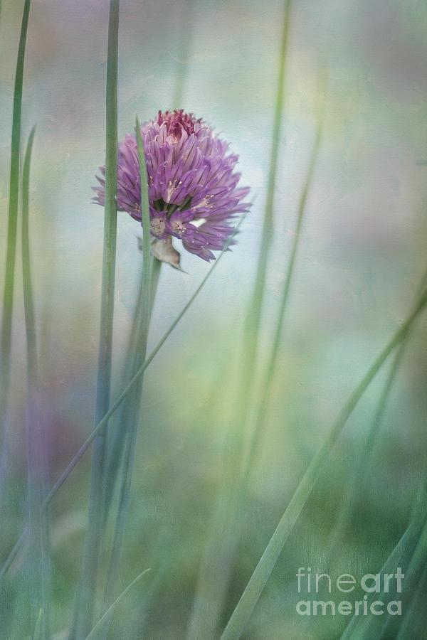 Herbs Photograph - Chive Garden by Priska Wettstein