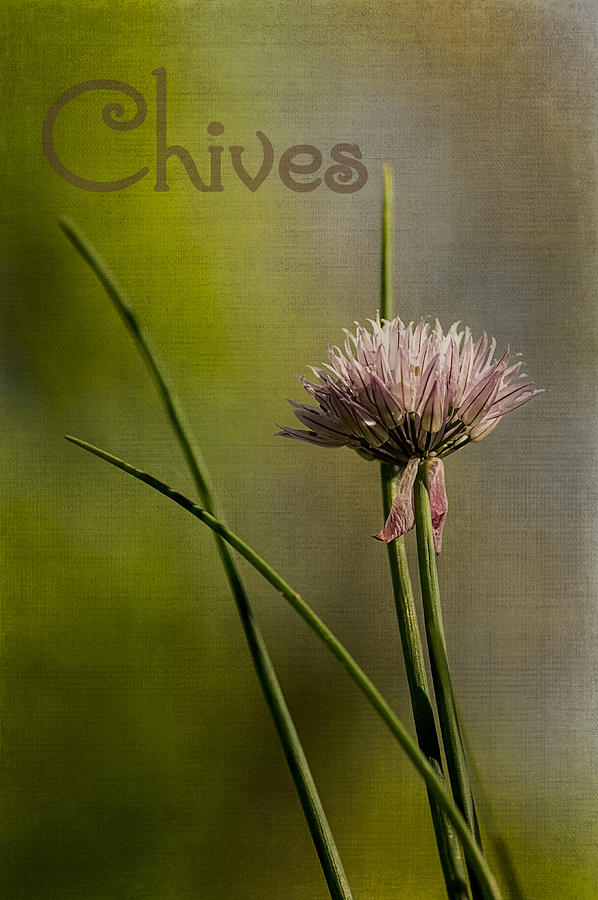 Food Photograph - Chives by Wayne Meyer