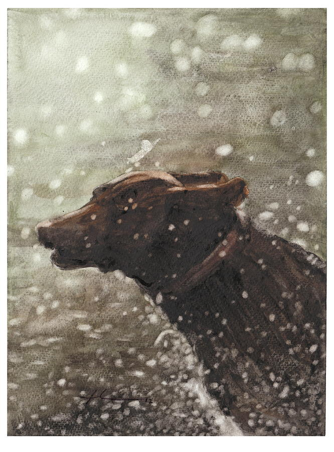 Chocolate Lab In Water Watercolor Portrait Drawing by Mike Theuer