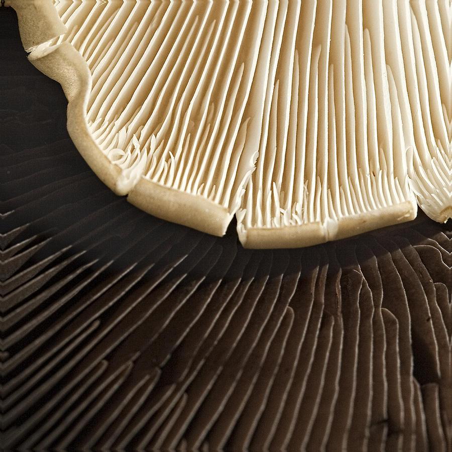 Vanilla Photograph - Chocolate Or Vanilla by Marilyn Cornwell