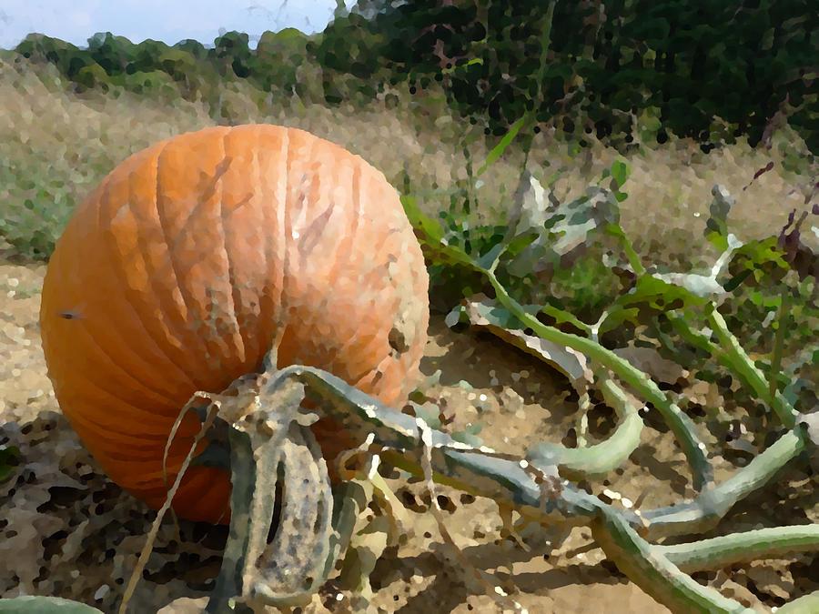 Pumpkin Photograph - Chosen by Richard Reeve