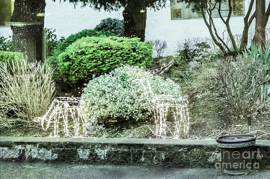 Chrismas At Evergreen Village Photograph