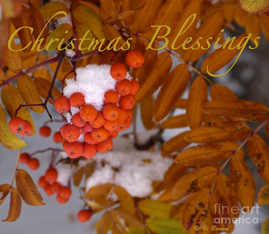 Christmas Cards Photograph - Christmas Blessings Card by Vi Brown