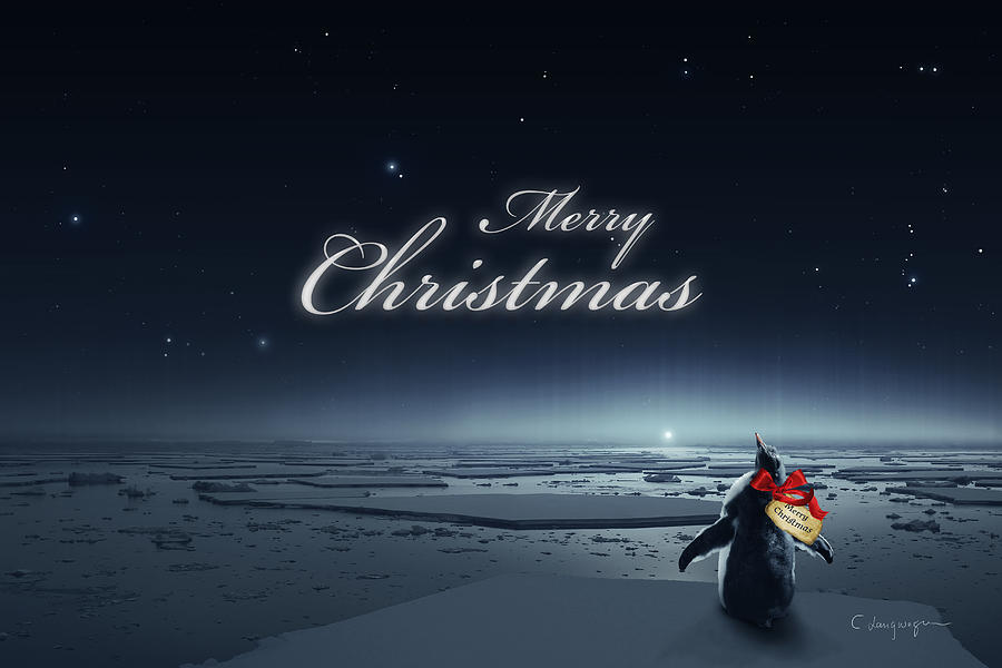 Christmas Card - Penguin black by Cassiopeia Art
