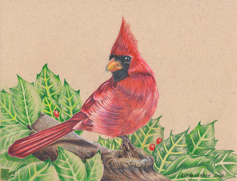 Christmas Cardinal Drawing by Cindy Lenker