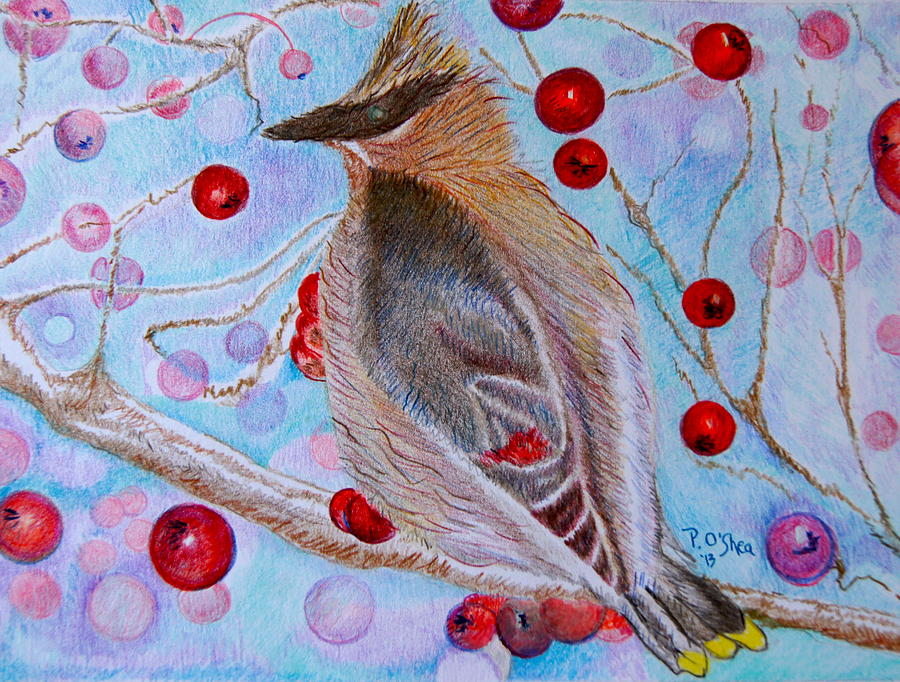 Christmas Cardinal Drawing by Patricia O'Shea