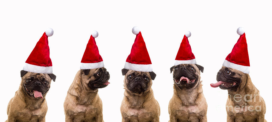 Caroling Photograph - Christmas Caroling Dogs by Edward Fielding