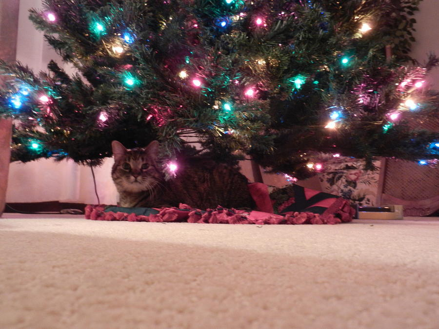 Cat Nap Photograph - Christmas Cat by Katherine McLeister