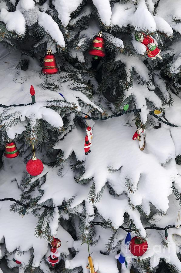Christmas Photograph - Christmas Decorations On Snowy Tree by Elena Elisseeva