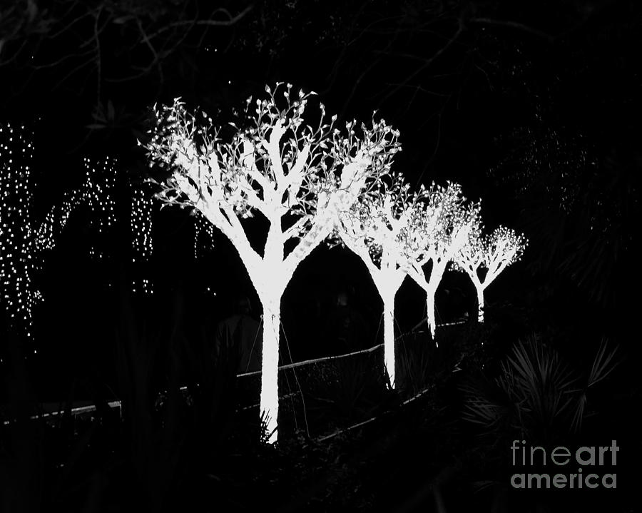 Christmas Lights In Black And White Photograph by Carol Bradley