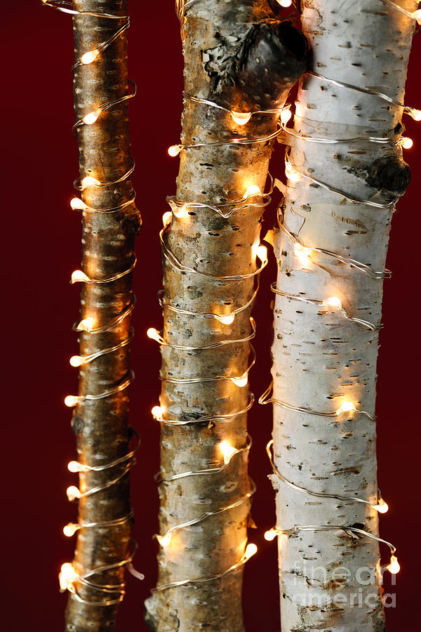 Christmas Photograph - Christmas Lights On Birch Branches by Elena Elisseeva