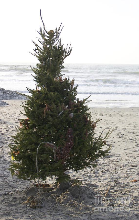 Christmas Tree Photograph - Christmas On The Beach 1 by Michael Mooney