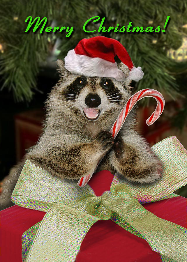 Funny Taxidermy Fails together with 355502964310136519 furthermore Christmas Raccoon Jea te K in addition Hybride besides Wall Decor Hand Wall Shelf Gold Hands. on animal art taxidermy