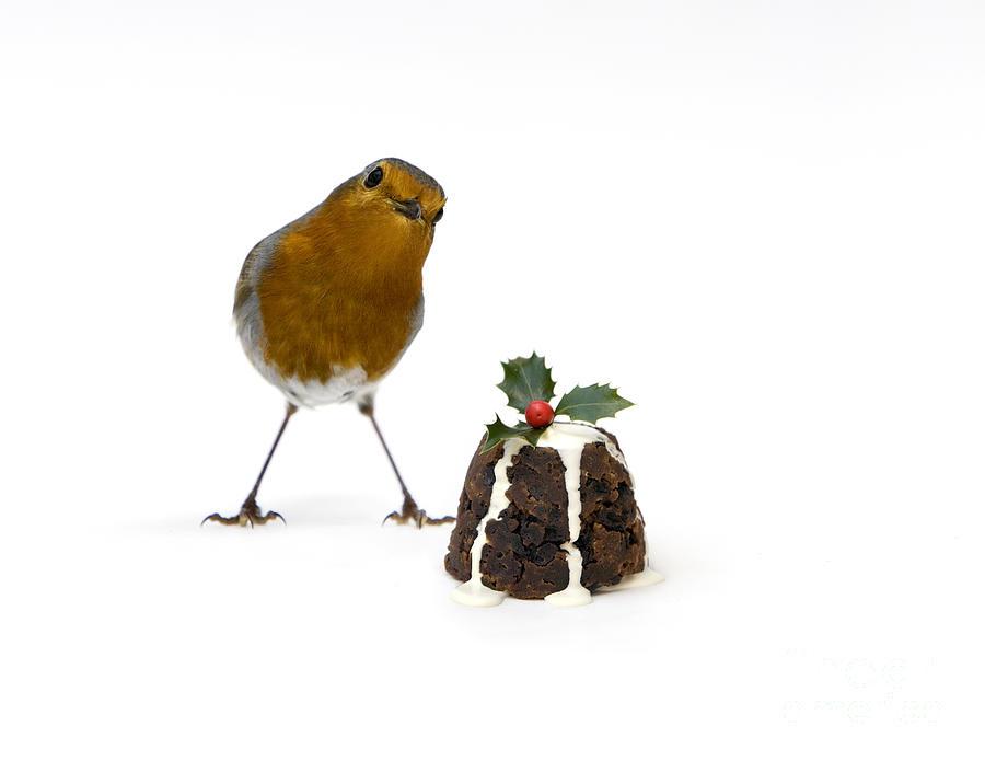 Christmas Photograph - Christmas Robin by Tim Gainey