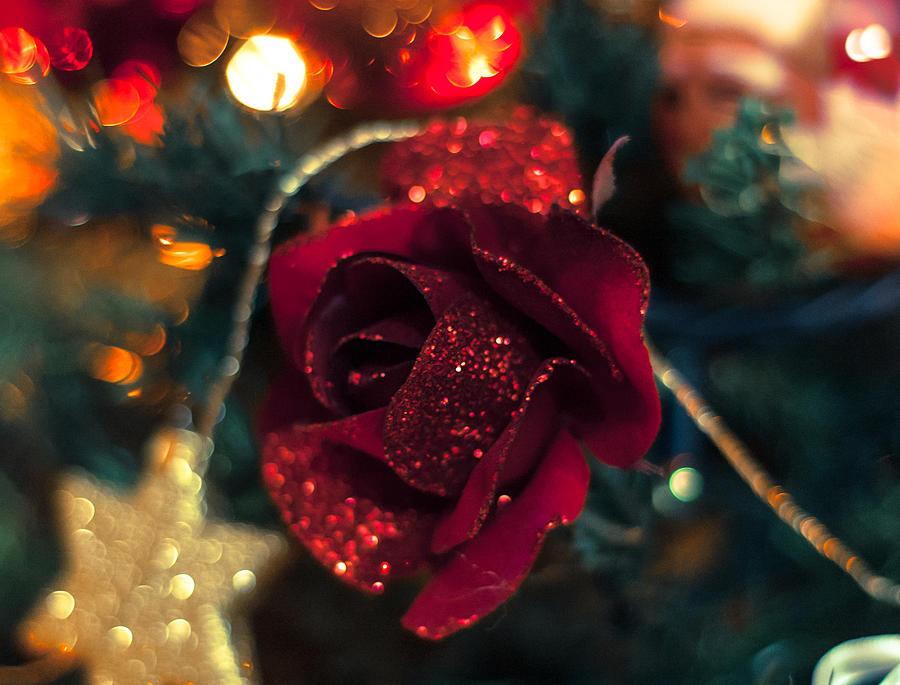 новогодние розы фото