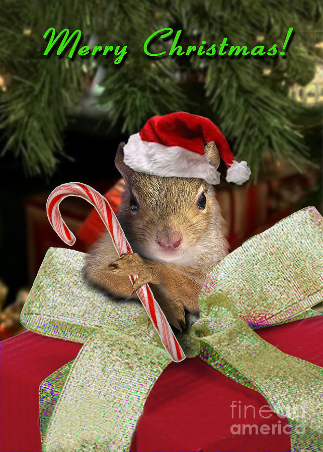 86177799ac342 Christmas Squirrel Photograph by Jeanette K