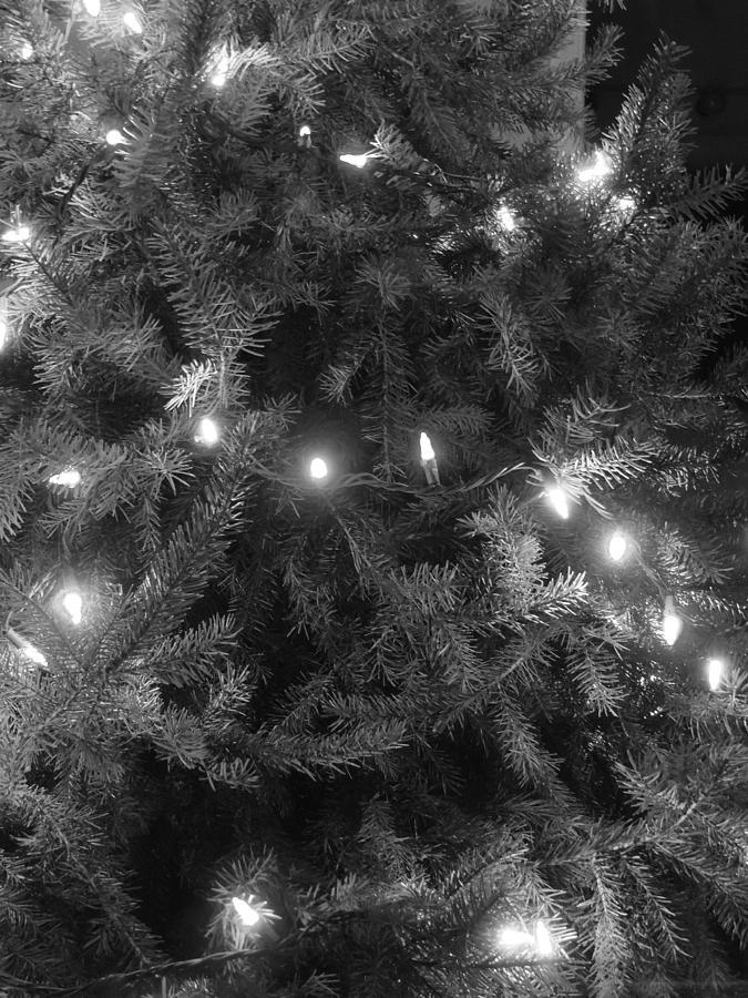 Christmas Tree Photograph - Christmas Tree by Anastasia Konn