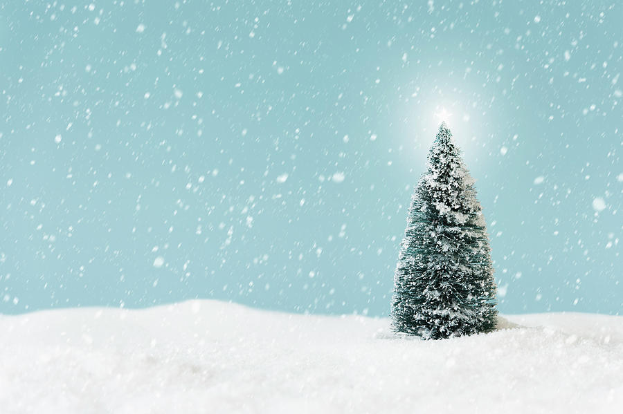 Christmas Tree Covering By Snow, Studio Photograph by Tetra Images