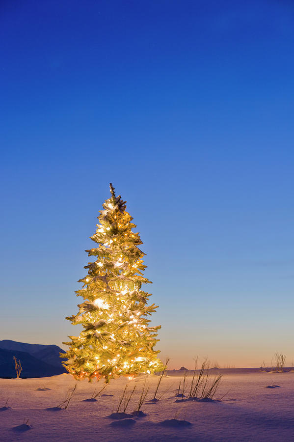 Christmas Tree Decorated And Lit With Photograph by Kevin Smith / Design Pics