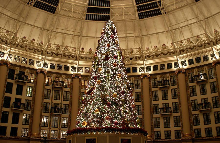 Christmas Photograph - Christmas Tree by Sandy Keeton