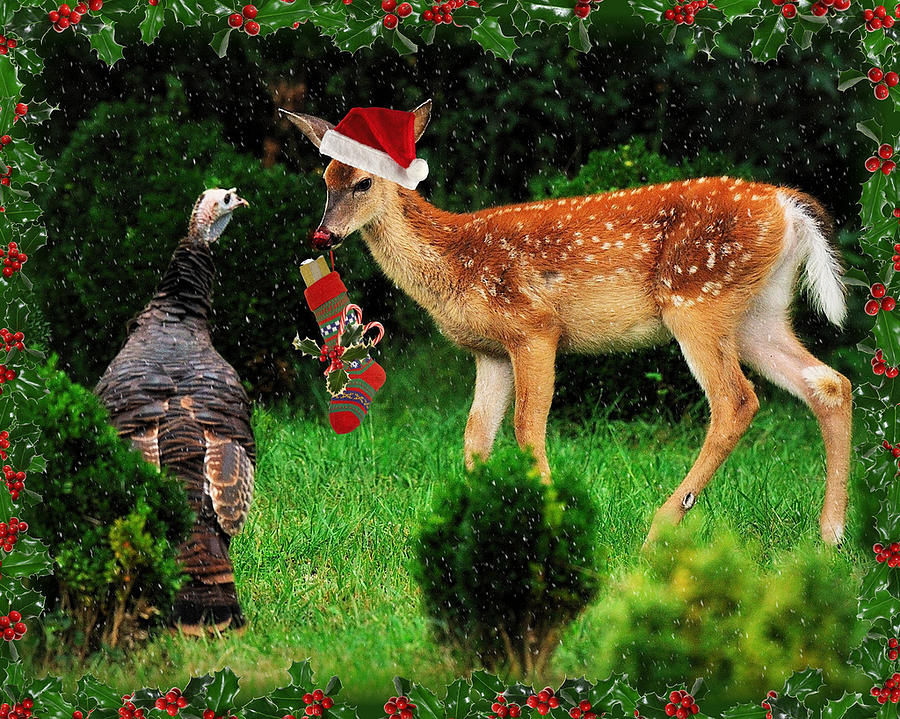 Wildlife Digital Art - Christmas Wild Turkey and Fawn by Angel Cher