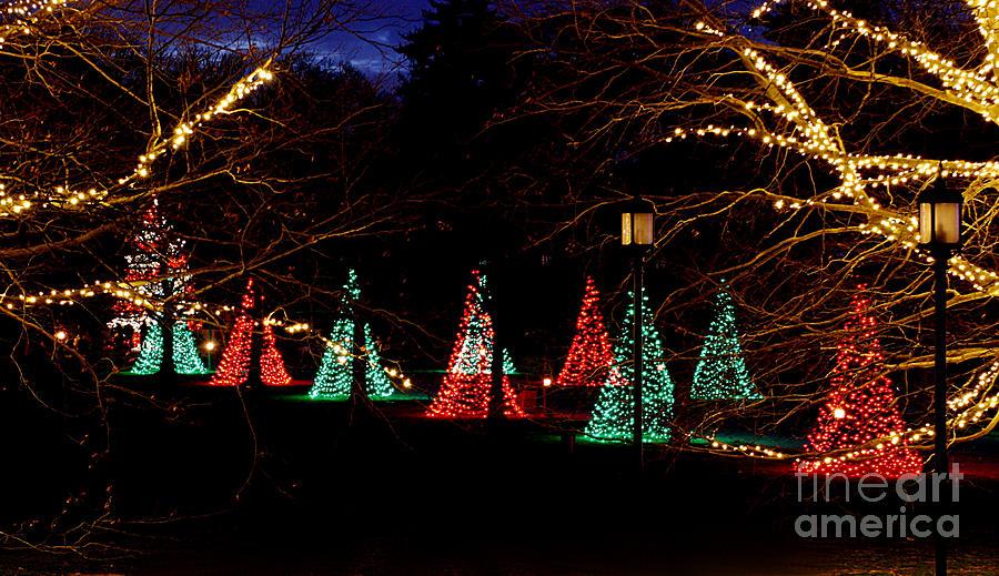 Christmas Photograph - Christmas Wonderland Walk by Living Color Photography Lorraine Lynch