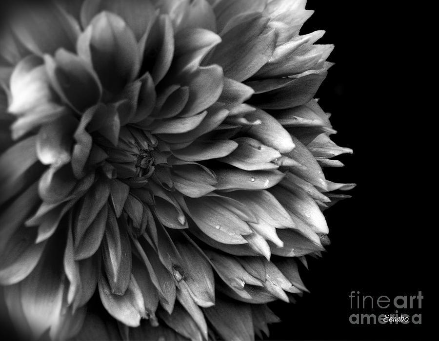 pdf in black and white