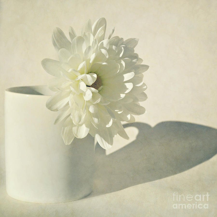 Flower Photograph - Chrysanthemum Shadow by Lyn Randle