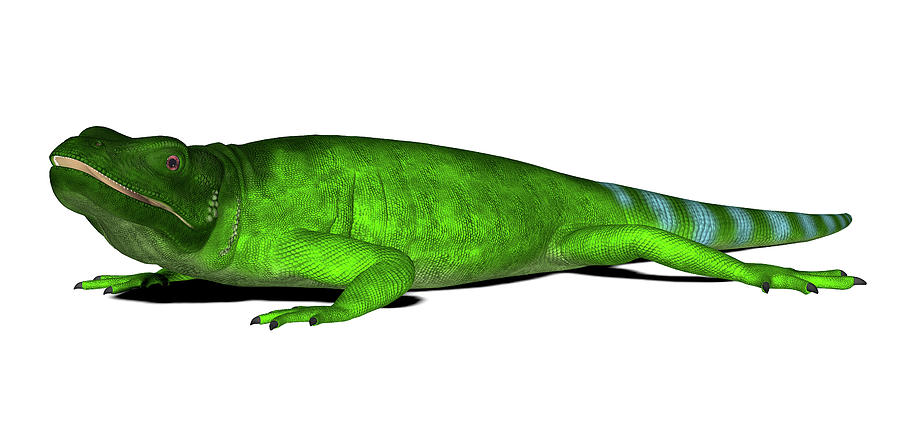 Nobody Photograph - Chuckwalla Lizard by Friedrich Saurer
