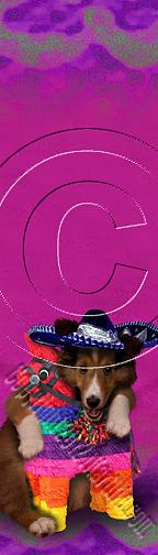 Bookmark Photograph - Cinco De Mayo Sheltie # 412 by Jeanette K
