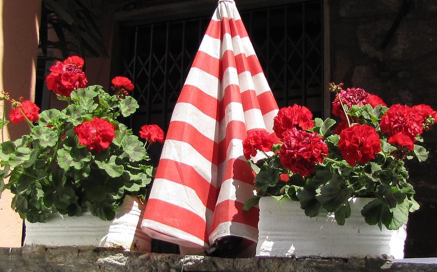 Cinque Terre Geraniums Photograph