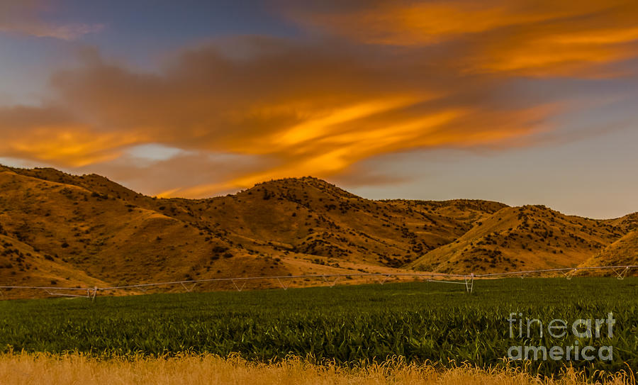 Corn Photograph - Circle Of Corn At Sunrise by Robert Bales