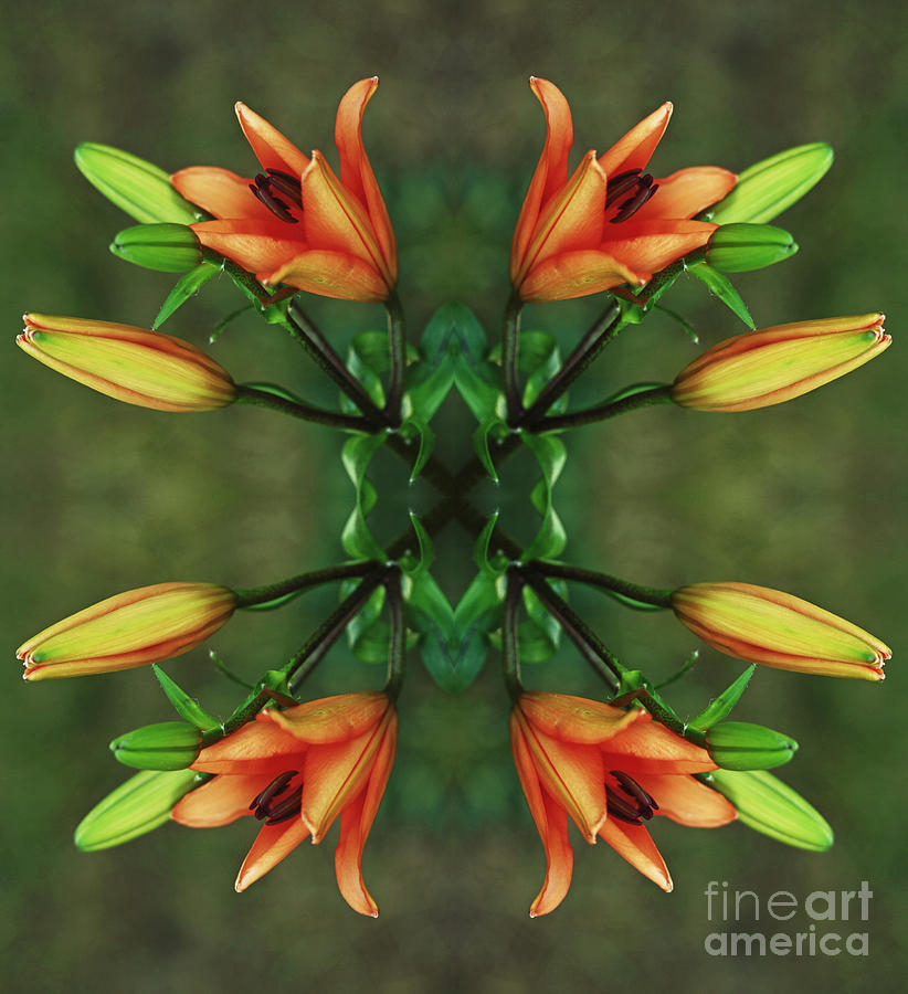 Mandala Photograph - Circle Of Life by Inspired Nature Photography Fine Art Photography